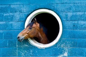Horse head sticking out of hole