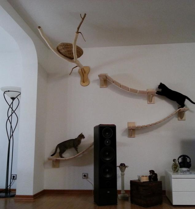 Man Transforms Room Into Feline Obstacle Course 171 Animal